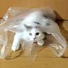子猫事故対策