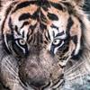 真・最強格闘家になろう第七話「二匹の若虎」