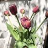 春のお花🌸