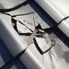 魚が屋根の上の瓦を割ることがあるのだ!