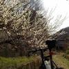 梅と椿と桜、花見と荒涼とした埠頭へ