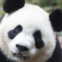 パンダのぼやき