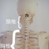骨の歪みで筋肉が引っ張られる