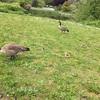 バンクーバーで出会える野生動物
