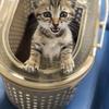 【猫ブログ】猫のトリビア?