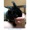 果敢に攻めいる黒ウサギ