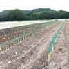 「9/29(Sun) 畑モーニング!」