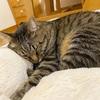 早起きの猫に対応してくれる優秀なやつ!おまけでママンのボヤキもあるよ笑