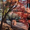 紅葉狩り散歩