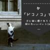 犬と猫を同時に贅沢できるアプリ「ドコノコ」を知っているか?