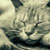 睡眠時間が長くて眠気が消えないのは、運動不足が最大の原因だった(個人の感想)
