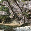 桜の花舞い上がる2021