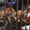 ベトナムの首都であるハノイ市は市民に犬・猫肉食を止めるように警告!イメージの悪化・狂犬病の蔓延防止が目的!!