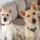 2匹の犬の里親日記