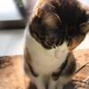 【愛猫日記】毎日アンヌさん#234