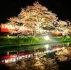 菜の花&桜の小湊鉄道