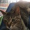 猫との生活、なめハゲAgain