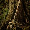 JARDIN BOTANICO 寄生植物