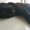 今日の黒猫モモ&白黒猫ナナの動画ー1033