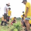 夏の収穫祭だー!!!~畑編~
