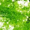 有機栽培 天然原料の パーマ?