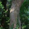 そして僕は樹皮を撮る。人間いつかは孤独になるのだから。