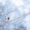 初雪に浮かれて龍神カード引いてみた