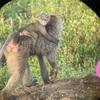 【サファリツアー3日目①】ナクル湖国立公園~サイとフラミンゴ~