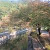 琵琶湖疎水の秋を感じながら四宮~山科まで散歩