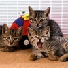 🐧の可愛いペットを紹介‼️〜猫飼っている人必見の情報を公開‼️〜