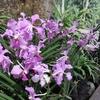 シンガポールの無料植物園「ボタニックガーデン」で緑に癒される