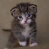 猫の動画とかを見ていて一気にテンションが下がる瞬間
