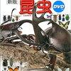 ヒアリのニュースを見て・・・蘇る面白い遊び@蟻の巣