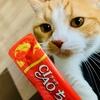 プロテインバー(と、ちゅーる)をお守りに、愛猫とダイエット。