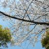 桜咲く 辰巳界隈