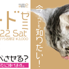 【セミナー御礼】今からでも知りたい!猫様のためのフードゼミ、開催しました