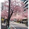 春の彩を実感