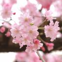冬は必ず春になる ~和花の蒔き直し日記~