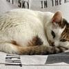 【臆病な猫】日々の生活と私の体験談⑥!!