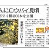 日本一の「蝋梅の里」で蝋梅を撮ってきました。