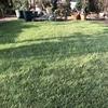 芝刈りとエアレーション