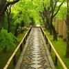 【127日目】京都最終日!どうしても見たかった琳派のデザインに触れて、今後の活動のヒントを得た!