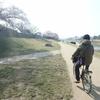桜の賀茂川と、あの日の右手