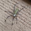 昆虫たちの寿命とは? 蜘蛛がいつまで生きるのか探してみよう。