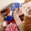 我が家の猫たち・工事の進捗状況⑥