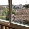 わが家の桜情報