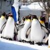 旭山動物園 ペンギンの散歩を徹底攻略(ルートとか見学メモとか撮影ポイントとか)
