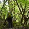 立夏の加持の森遊山 谷若葉