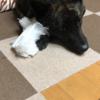 甲斐犬サンの宝物〜安クテモ良インダッ(❤︎_❤︎)♬