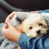 今日のマヤ暦「愛するもの・ことを持ちましょう」。KIN70 白い犬・白い世界の橋渡し・音5